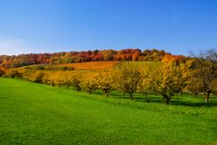 Autumn Field Scenery Royalty Free Stock Photo