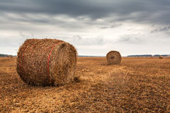 Autumn field with sheaves of hay and dramatic sky. Stock Images