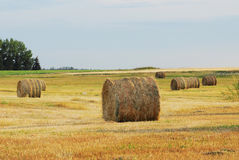 Autumn field and straw piles Stock Photo