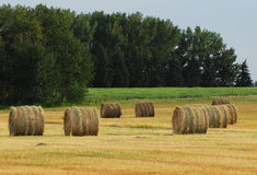 Autumn field and straw piles Royalty Free Stock Photo