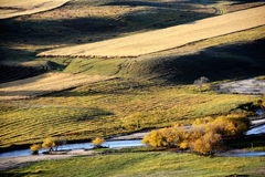 Autumn field with stream and golden birch trees Stock Photos