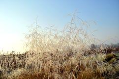 Autumn field. Field in the autumn sun lit Stock Photos