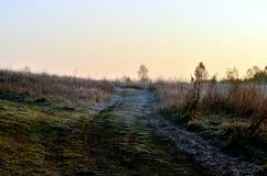 Autumn field. Field in the autumn sun lit Stock Photography