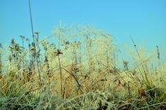 Autumn field. Field in the autumn sun lit Royalty Free Stock Photography