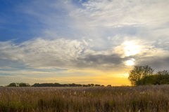 Autumn field. Autumn sun setting over field of Norfolk reed at Hickling Broad, Norfolk Royalty Free Stock Images