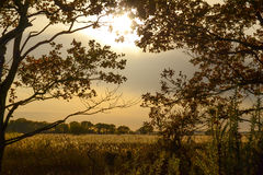 Autumn field. Sun shining through trees over field of Norfolk reed at Hickling Broad, Norfolk Royalty Free Stock Photo