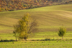 Autumn field with tree Royalty Free Stock Photo