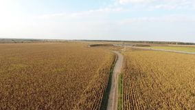 Autumn field, view from drone stock video