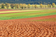 Autumn Fields Royalty Free Stock Images