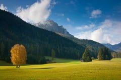 Autumn fields Stock Image