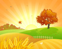 Autumn fields sunset. Illustration of a beautiful autumn wheat field and bright foliage tree Stock Photography