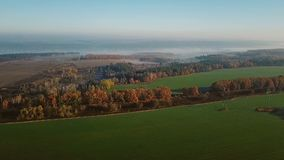 Autumn fields and trees. Aerial video footage. View from above stock video footage