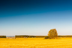 Autumn In The Fields 2. Autumn view of the fields in the rural Finland stock images