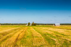 Autumn In The Fields 3. Autumn view of the fields in the rural Finland royalty free stock photos