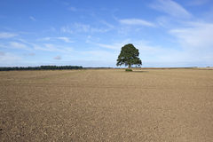 Autumn fieldscape. An autumn landscape with a view of cultivated fields and a lone tree with a background of distant woods under a blue sky Stock Photography