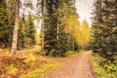 Autumn in Finland Royalty Free Stock Photo