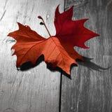 Autumn Fire Stock Image