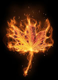 Autumn flame leaf Stock Photo
