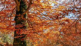Autumn flames over the tree royalty free stock photo