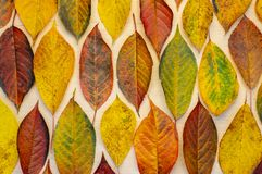 The autumn flickering leaves are arranged in a sequence and in a certain order, vertically royalty free stock images