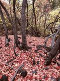 Autumn Floor imagenes de archivo