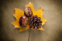 Autumn Flora på tappningpapper Arkivbild