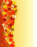 Autumn floral background Royalty Free Stock Photos