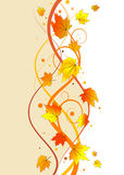 Autumn floral background Royalty Free Stock Photography