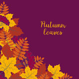 Autumn floral background with colorful silhouettes of tree leaves on purple background, design elements for the fall season banner Royalty Free Stock Photos