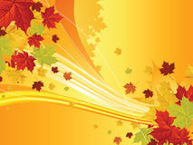 Autumn floral background Stock Photography