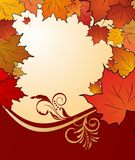 Autumn floral background with maples Royalty Free Stock Photography