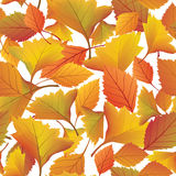 Autumn floral background seamless. Stock Photography