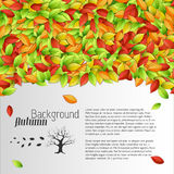 Autumn floral background Stock Photo