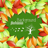Autumn floral background Stock Images