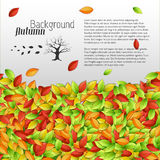 Autumn floral background Royalty Free Stock Images