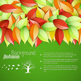 Autumn floral background Stock Image