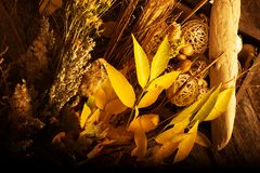 Autumn Floral Composition Stock Photos