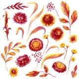Autumn Floral Elements Set Illustration Libre de Droits