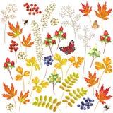 Autumn Floral Elements Set Illustration de Vecteur