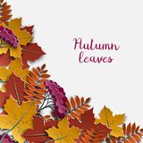 Autumn floral paper background with colorful tree leaves on white background, design elements for the fall season banner, poster Royalty Free Stock Image