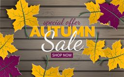 Autumn floral sale banner with paper colorful tree leaves on wood background. Autumnal design for the fall season banner, poster Stock Photos