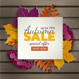 Autumn floral sale banner with paper cut frame and colorful tree leaves on wood background. Autumnal design for fall season banner Stock Photos
