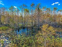Autumn Florida Swamp. Loxahatchee Slough Natural Area Palm Beach Gardens, Florida. Swamp Landscapes and wetland fauna royalty free stock image