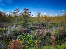 Autumn Florida Swamp. Loxahatchee Slough Natural Area Palm Beach Gardens, Florida. Swamp Landscapes and wetland fauna royalty free stock images