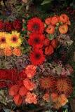 Autumn flower arrangement Royalty Free Stock Image