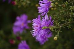 Autumn flower Stock Images