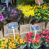 Autumn flower bouquets on farmer agricultural market, Germany Royalty Free Stock Images