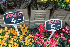 Autumn flower bouquets on farmer agricultural market, Germany Royalty Free Stock Photo