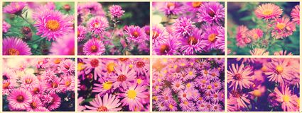 Autumn Flower - Chrysantenchrysant Mooie collage van foto's, panorama stemmende stijl instagram royalty-vrije stock foto