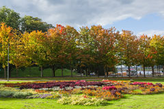 Autumn flower in the city garden Stock Photo